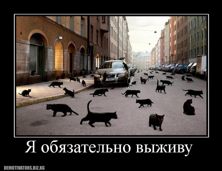 818563_ya-obyazatelno-vyizhivu.jpg