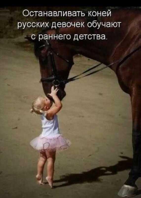 koni.jpg